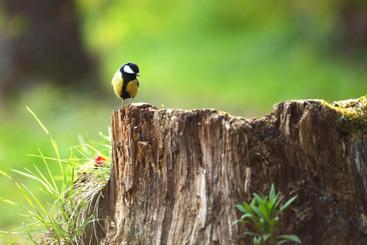 Beautiful bird sitting on a tree stump that requires grinding