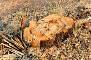 You do not want this uneven stump in your yard. It's time to grind the stump.